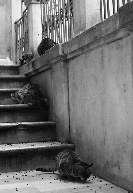 Street cats in Galata